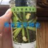 进口荷兰安莎耐热西葫芦种子-SQ210