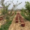 萧县大沙河生态园葡萄基地大量供应优质阳台葡萄