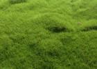 仿真植物草皮 微景观 永生花 微景观绿色装饰多肉植物相框盆景