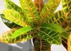 仿真两叉金蓉高档塑胶花盆景盆栽绿植diy植物墙面装饰绿植批发