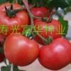 圣尼斯粉果番茄种子-美帅2042