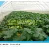 蔬菜大棚建造  抗风性强