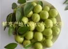 枣农果园基地鲜梨枣批发供应商