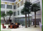 厂家直销高仿真老人葵人造扇葵树 酒店商场装饰玻璃钢蒲葵树热销