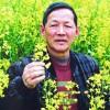 饲料油菜种子 傅廷栋 科技苑 甘蓝型油菜种子 种油菜不榨油
