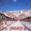 冰葡萄酒 北冰红冰葡萄酒 威代尔葡萄酒 威代尔冰葡萄酒