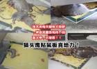 猫头鹰粘鼠板, 进口胶水管用的老鼠贴