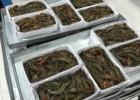 南美白对虾 海外工厂直销 成本价 大批采购 价格低一手货源