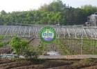 供应生态餐厅温室|生态园餐厅温室选址设计|生态温室建造