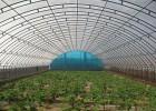 温室大棚建设工程建设时应注意方向的确定