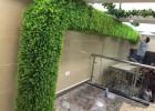 简单点的植物墙,深圳仿真植物墙