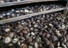 優質香菇基地直供21/斤