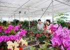 专业为绿化公司批发各种花卉,量大从优,欢迎致电