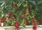温室大棚建设工程让农户尝到了甜头!