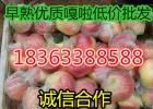 今日山东苹果产地批发价格