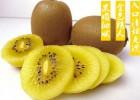 上海黄心猕猴桃批发在哪找,培馨农庄上海红心猕猴桃批发行业