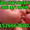 山东红富士苹果价格今日纸袋苹果哪里价格便宜