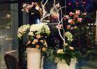 浙江温州提供租赁租摆花卉草木,花草绿化,绿植便宜租赁摆放摆设