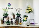 浙江温州提供公司、单位、店面、商务办公场所等绿植租赁摆设陈列