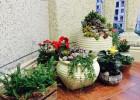 温州家庭庭院室内创意绿化 小区花园设计美化 有机菜园种植养护