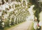 浙江温州美式美剧中的户外婚礼婚庆,明星草地草坪户外婚礼