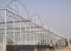日光温室建设保温好投资低节约能源