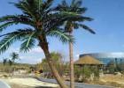 厂家定制仿真植物热带风景树 保鲜椰子树 人造玻璃钢环保椰子树
