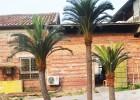 热销北方沙漠植物人造苏铁巴西铁树 迷你苏铁会议室装饰假铁树