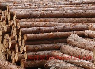 杉木 木材 原木 量大从优 思竺竹木业有限公司