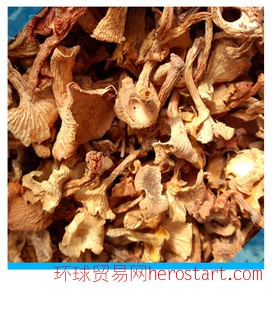 产地直销野生鸡油菌干湖南特产 纯天然绿色食品鸡油菌 1公斤包邮