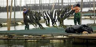 湖南干海带供应 长沙干海带批发 福建海带干海带批发价格