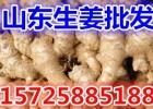 山东生姜产地优质大姜市场批发价格行情