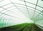 如何合理的进行蔬菜大棚的采光