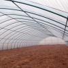 优良的花草温室供给 河北花草温室大棚