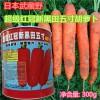 红冠黑田胡萝卜种子武藏野耐热夏季可种超级五寸秋季四季播