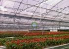 温室根据室内温室方式分类