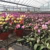集美盆栽租賃-上哪找有品質的廈門盆栽綠植租擺