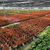 厦门绿化养护公司-哪儿有专业的厦门小区绿化养护