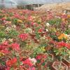 厦门能租花-提供专业的厦门小区绿化养护