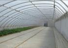 冬暖式温室蔬菜大棚建设