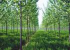 濮阳创美林业评估,林业评估报告服务,林业评估公司