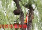 川悦仿真树藤管仿生树藤管亮化工程PVC树藤穿线管