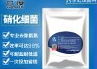 甘度硝化细菌污水处理菌种好氧净水干粉高效去除氨氮废水处理菌
