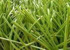 塑料假草坪双面带筋草足球运动场人造草坪5公分PE材质人工草皮