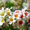 每年几月可以种植文冠果