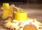 家禽养殖塑料围网