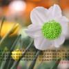 东莞优良的绿色PC/ABS再生料-绿色PC/ABS再生料厂家