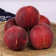 产地直销超红圣早熟硬质毛桃,颜色全红,耐运输
