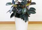 广州萝岗科学城办公室绿植盆栽植物花卉购买租摆