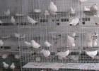 镀锌三层四层鸽子笼厂家直销-双柏丝网